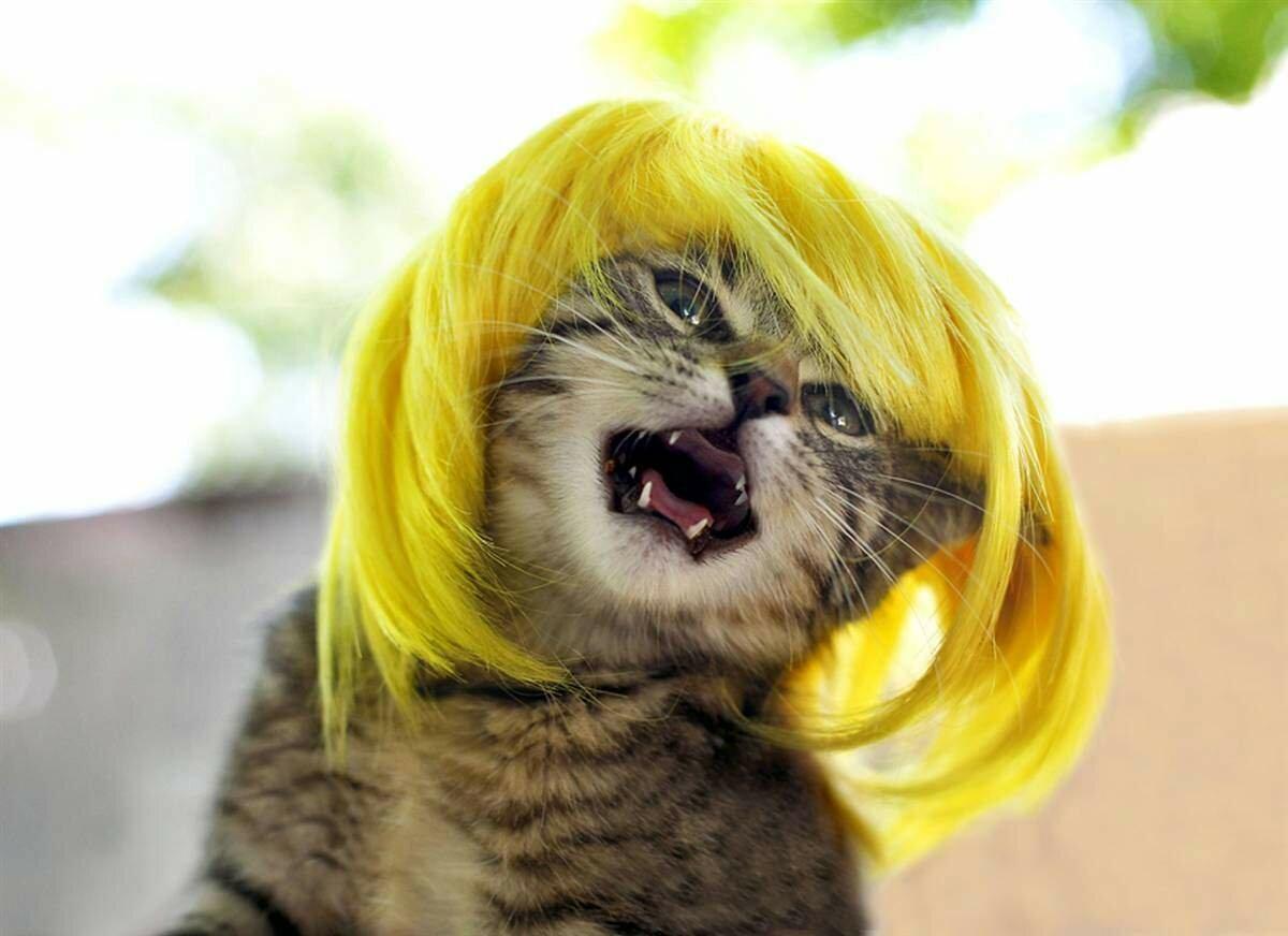 Кошка с прической